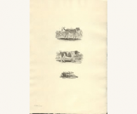 Three Dogs, Thomas Bewick