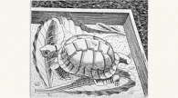 Tortoise, Edward Bawden